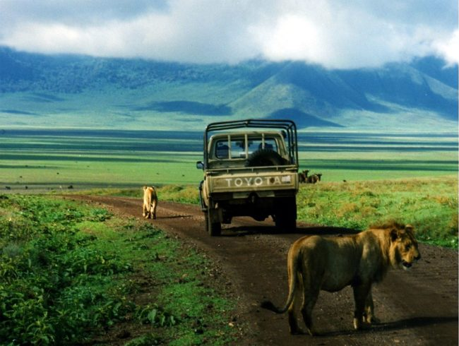 Unforgettable African Safari